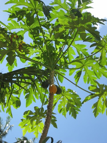 Papaya, Tahuata