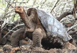 gambar binatang, jenis kura, foto hewan gurun, tanah tandus, keajaibah Alam, hewan yang kuat luar biasa menakjubkan
