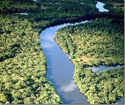 amazonas thumb 21 de marzo, Día Forestal Mundial