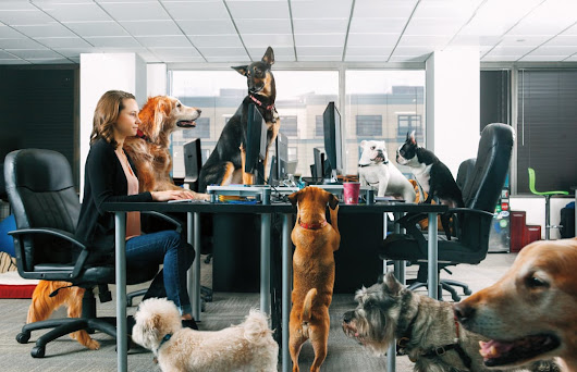 11 Top Dog-Friendly Offices Around the Country | Rover Blog