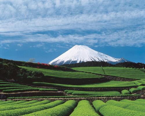 volcan Fuji