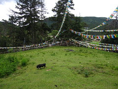 Ringa temple, Yunnan
