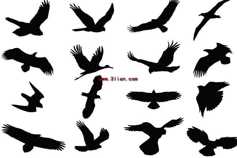 65+  Gambar Burung Terbang Sketsa HD Terbaru Gratis