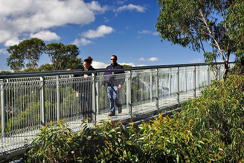 Illawarra Fly Tree Top Walk, Knights Hill, New South Wales, Australia IMG_4548_Illawarra_Fly