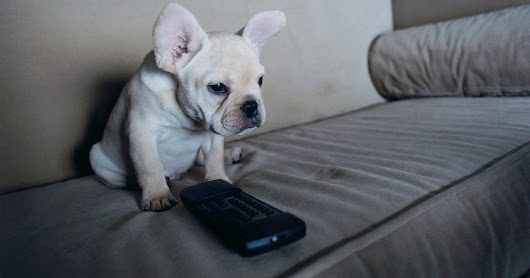 New TV remote control for DOGS developed - and it does include a paws button