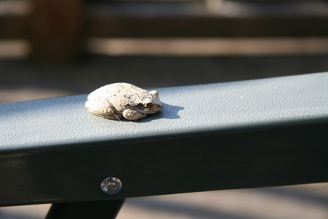 Toad on chair
