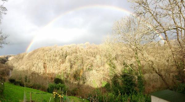 baretreesrainbow1.jpg