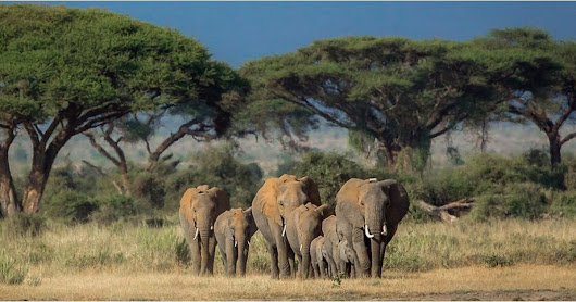 African Wildlife Photos by Susan Portnoy | POPSUGAR Pets