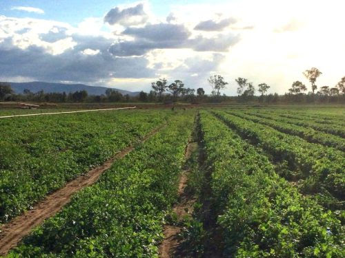 5 Best Ways To Find Farm Jobs In Australia