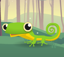 Pet Gecko