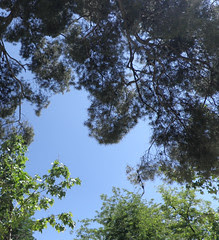 Sky and trees, Retiro, Madrid