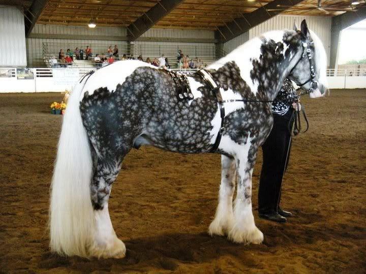 Silver-bay animal horse