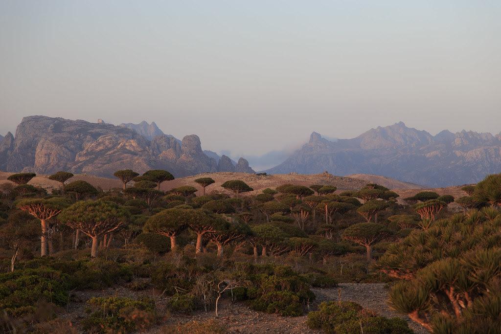 Firmhin Plateau, Socotra, Yemen