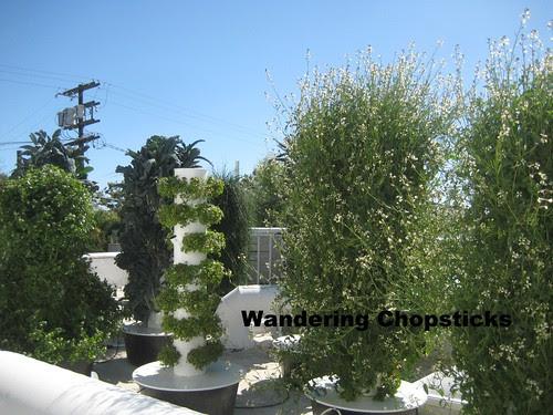 Rooftop Garden - Playa Restaurant - Los Angeles 23