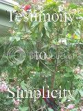 Testimony to Simplicity