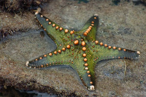 star_green&orange
