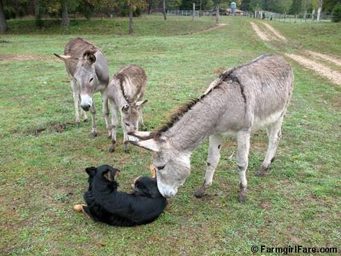 The Daily Donkey 104