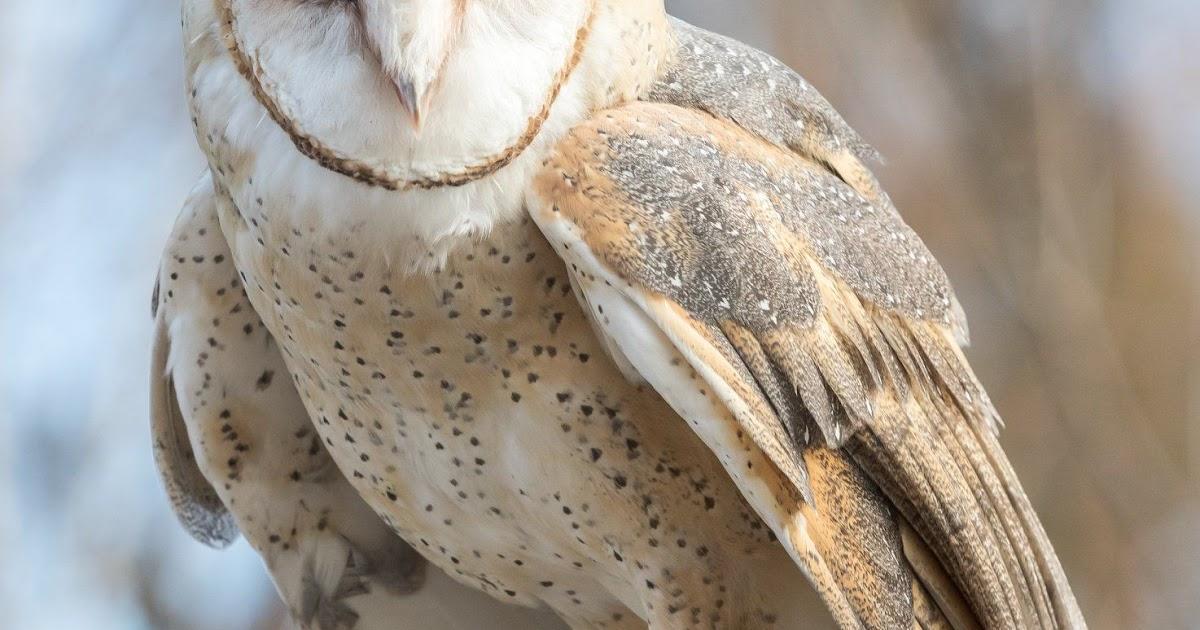 Somerset Barn Owl Cam - HOME DECOR