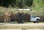 San Diego Wild Animal Park Safari Truck
