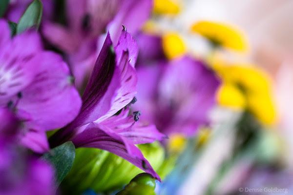 a splash of purple