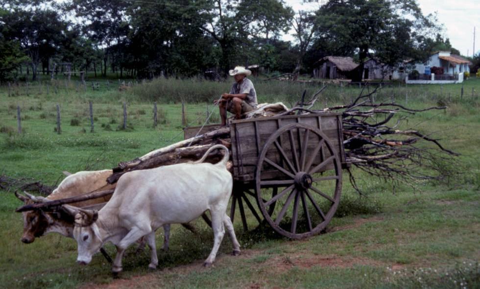 Un hombre conduce una carreta en Paraguay.
