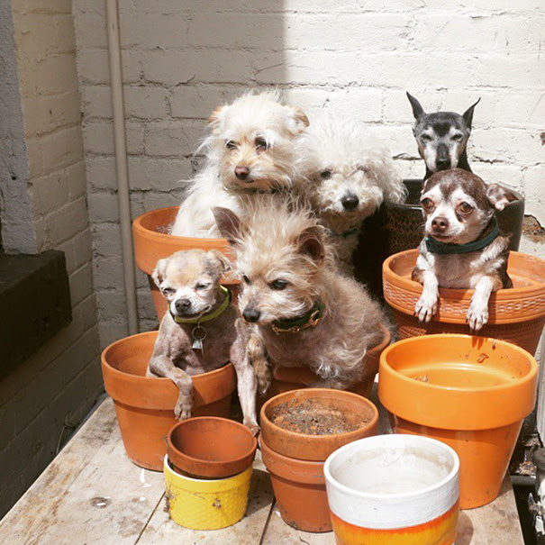 man-adopts-senior-dogs-shelter-steve-greig-38