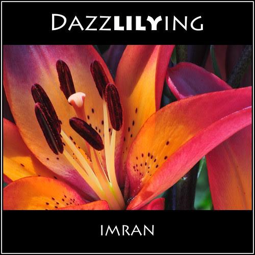 DazzLILYing! Dazzling Lily - IMRAN™ by ImranAnwar
