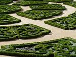Hedge, Boxwood, Garden, Decorative, Park