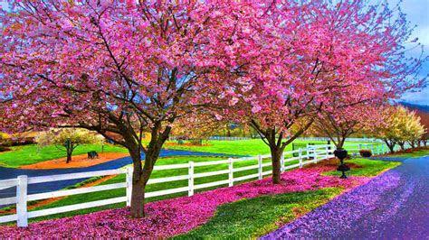 beautiful spring wallpapers desktop wallpapersafari