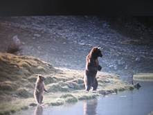 Η Αρκούδα