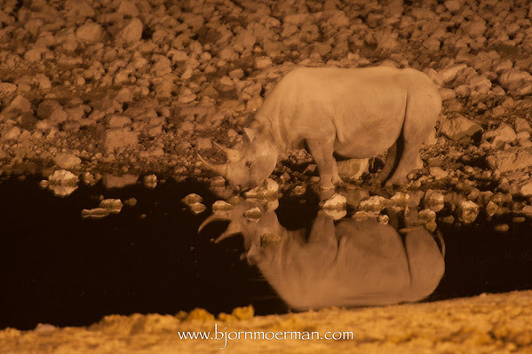 Rhino at Okaukuejo waterhole by night