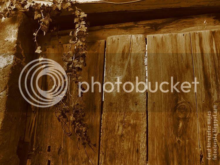 La rama de una planta cae sobre la puerta de madera de una casa de pastor abandonada en las montañas de Albarracín