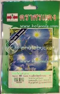 เมล็ดพันธุ์ดอกผักบุ้งฝรั่ง