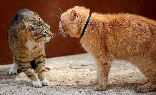 Do Well-Adjusted Cats Sometimes Get Into Fights? | Cats