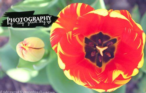 http://i402.photobucket.com/albums/pp103/Sushiina/daily_flower.jpg