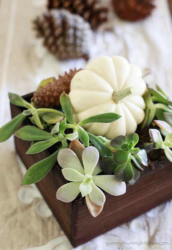 fall succulents