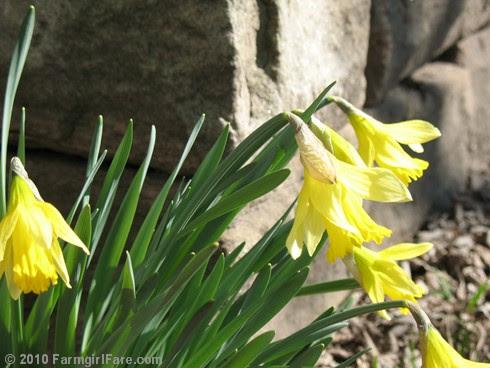 Spring Has Sprung 2