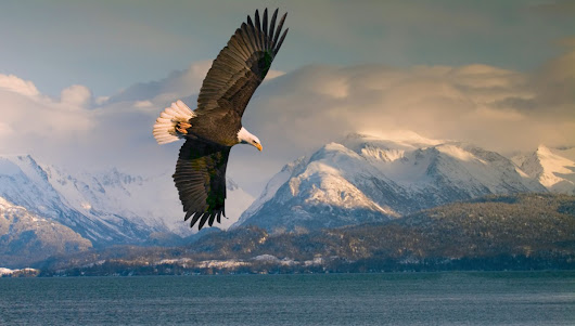 Alaska: An expedition cruise guide