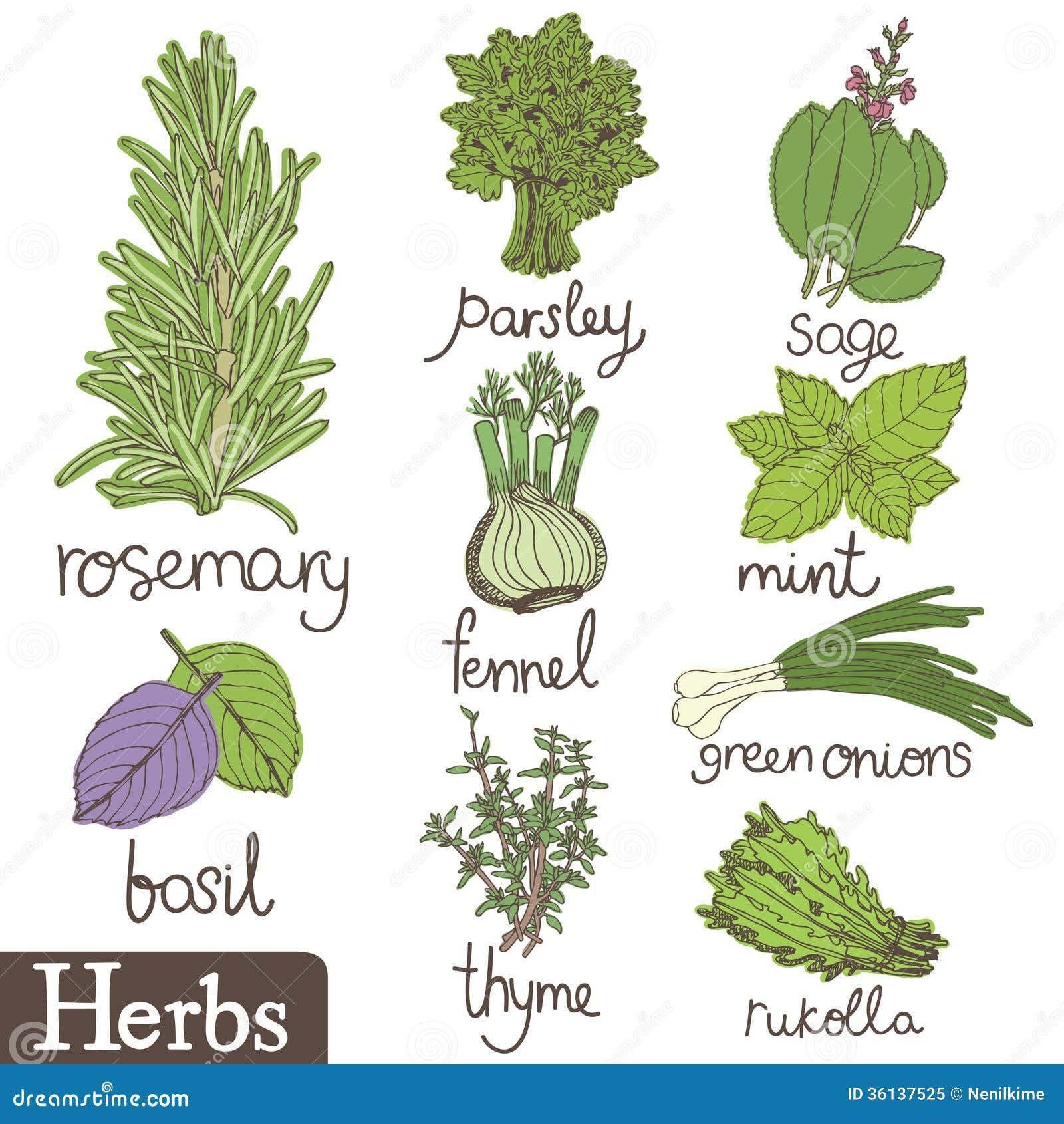 Herbs Set Royalty Fr