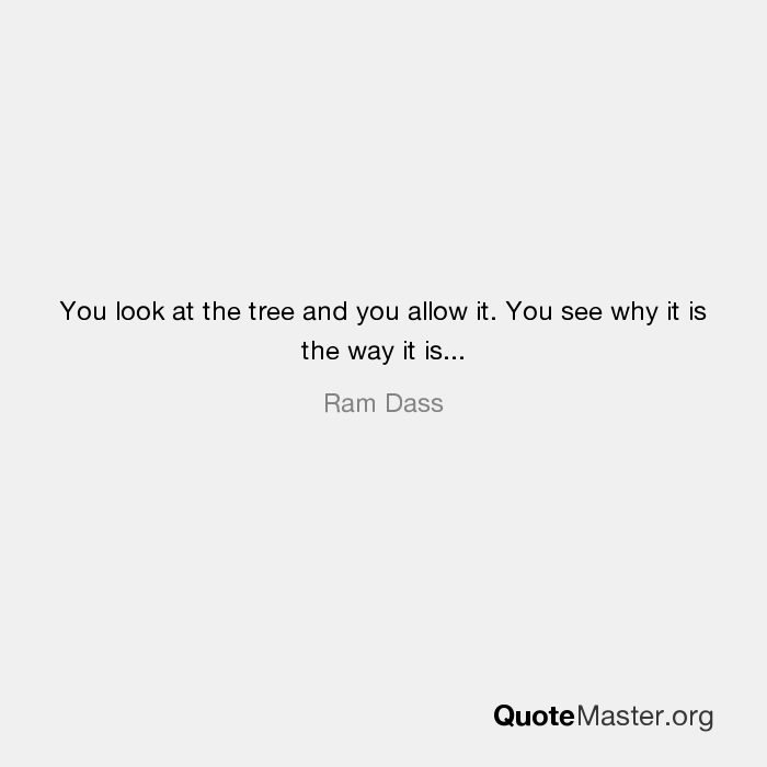 You Look At The Tree And You Allow It You See Why It Is The Way It