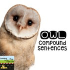 Owl Compound Sentences Literacy Center