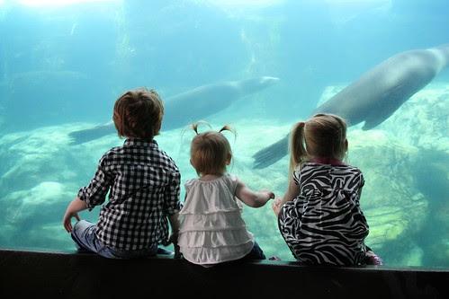 Aquarium of the Pacific Feb 2012 16