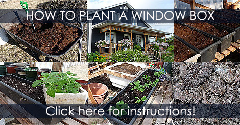 How to Plant a Window Box - Container Planting Tips and Ideas