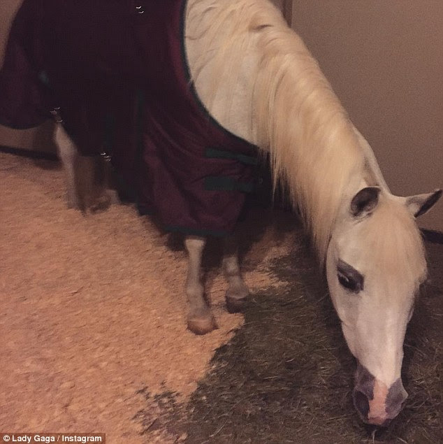 'Night my sweet girl': The horse turned up at her Malibu home on Monday and the 29-year-old was blown away