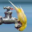 Water is Important – Paco Parrot's Blog