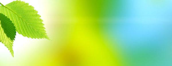 Unduh 99 Background Banner Green Gratis Terbaik