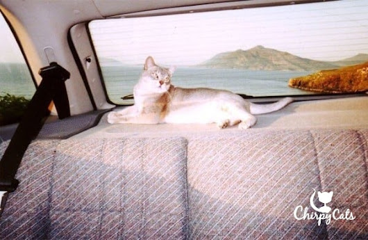 How to Train your Cat for Road Trips – Chirpy Cats