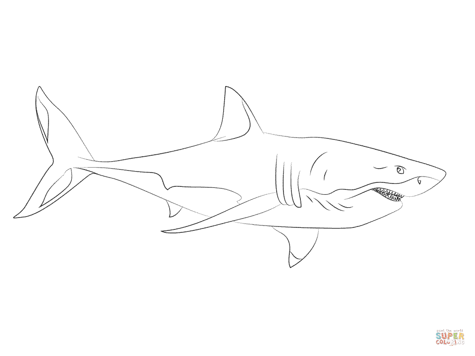 Great White Shark 3 coloring page | Free Printable ...