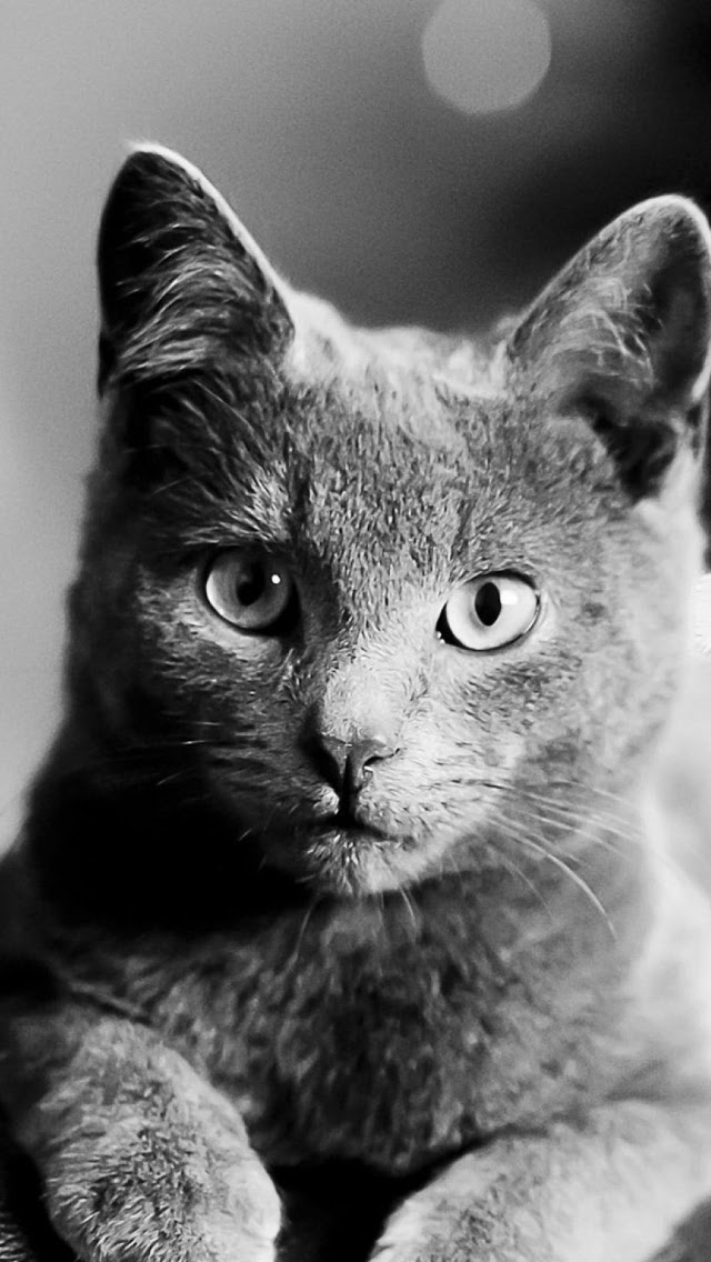 Cat Black And White Bokeh Mobile Wallpaper Mobiles Wall