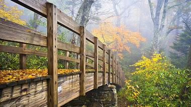 Puentes con color de otoño